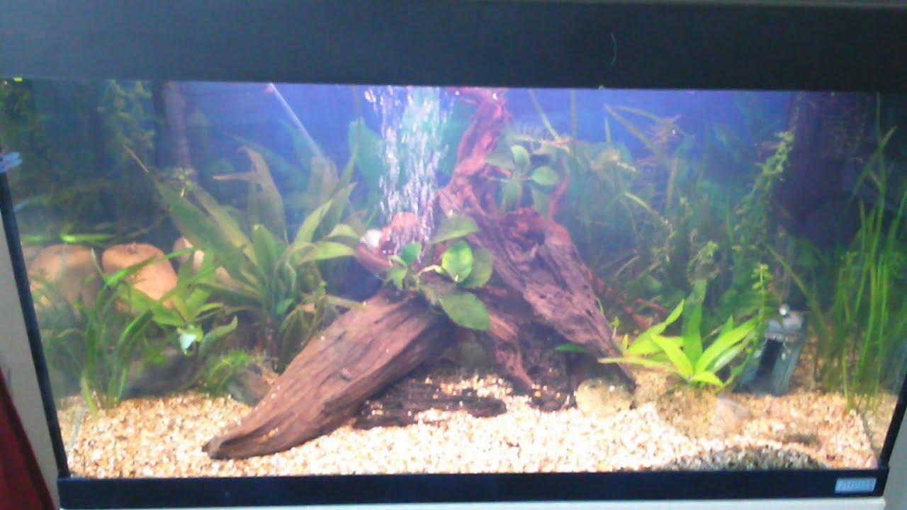 Freshwater aquarium no fish - New Tank Setup No Fish