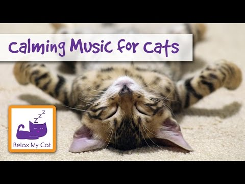 Stop your Cat from Chewing Cables and Scratching with this Calming Music