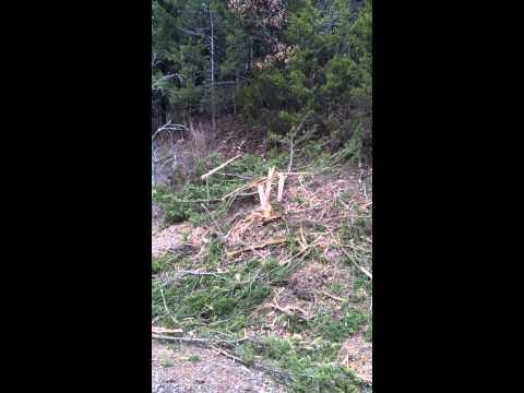 Harmon PFarms: Destruction of our farm road trees by XTo Energy