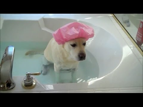These Kids And Pets Hate Taking Baths, Try To Avoid Them By Being Adorable | HuffPost Life