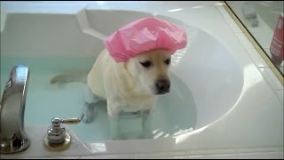 お風呂ギライなペットたち、なんとかお風呂を回避しようとする8つの方法