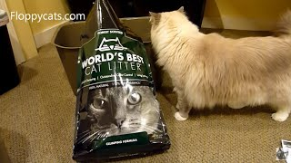 Ragdoll Cats Review World's Best Cat Litter Forest Scented Clumping Formula - Floppycats