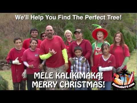 Kula Botanical Garden Christmas Trees 2012 -  Maui Hawaii