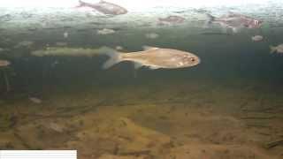 Эпизод № 1, зимняя рыбалка, съемка под водой.(Подводная съемка зимней рыбалки., 2015-02-09T19:40:53.000Z)