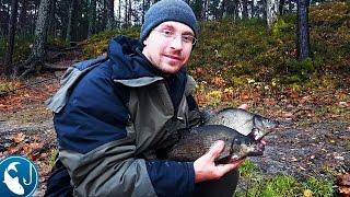 Ловля леща на реке в ноябре на #фидер. ловля на фидер осенью.