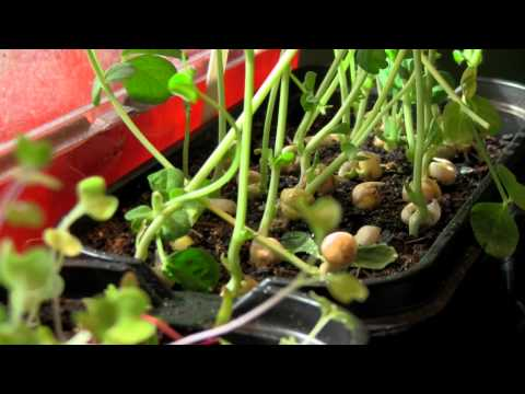 Growing Sprouts - Cameron Harris