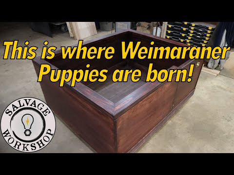 Puppies Are Due ANY Day! What In The World Is A Whelping Box? ~ BUILD PROJECT For Beautiful Puppies
