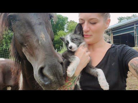 Kipper meets animals  Featuring Finnegan Fox