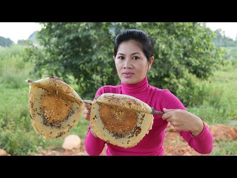 Awesome Cooking  Eating Beehive Using Chicken Powder - Roasted Bees - Village Food Factory