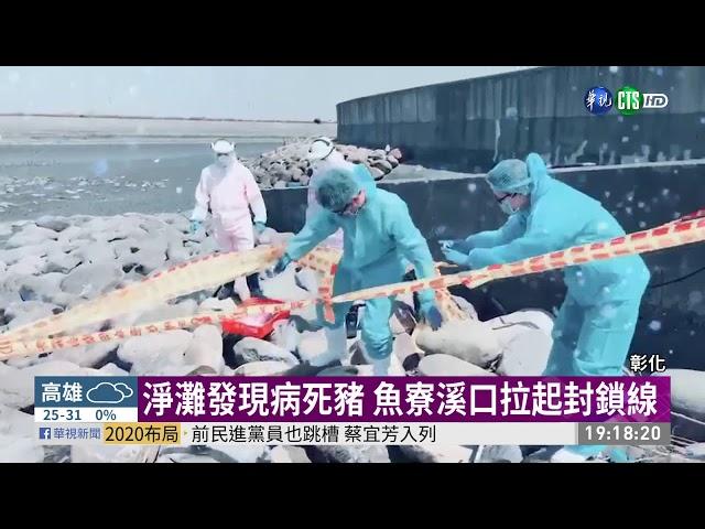 魚寮溪口發現病死豬 防疫員採樣消毒 | 華視新聞 20190922