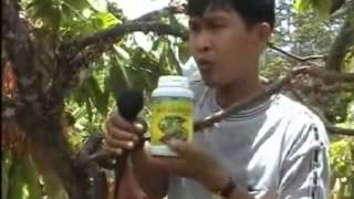 Budidaya Kakao Panen Melimpah Dengan Nasa 085227385551 BB 29A17DB3