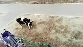 Собаки е****я