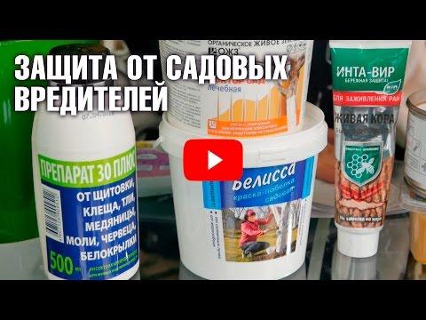 Вредители и болезни сада 🍀 Борьба с вредителями ✓  hitsadtv