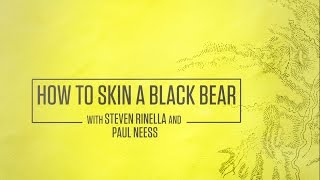 How to Skin a Black Bear with Steven Rinella and Paul Neess
