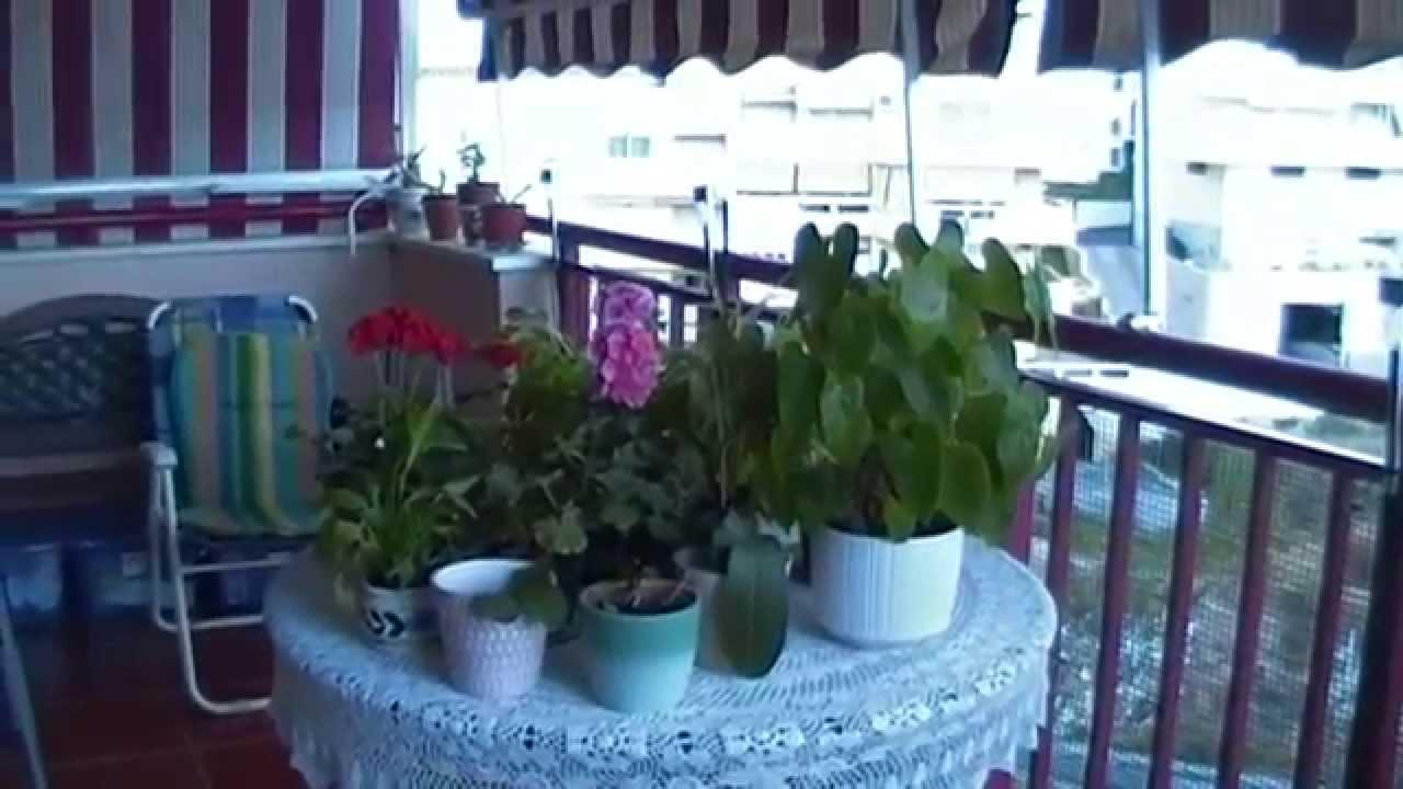 fotosvideo mini jardin botnico casero