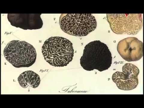 Разнообразие живых организмов