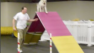 Honey's agility training practice