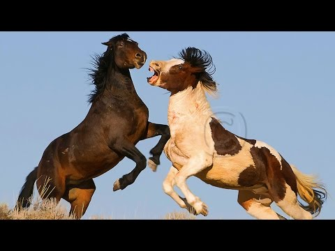 Wild Horses in the Arrowhead Mountains - Documentary