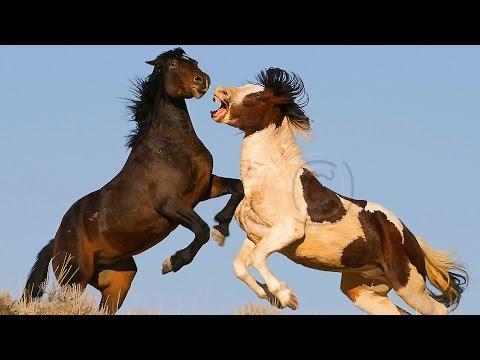Wild Horses in the Arrowhead Mountains - Documentary