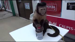 Заводная обезьяна - Детские песни - Животные для детей - Видео Приколы Обезьяны - Смешные Видео