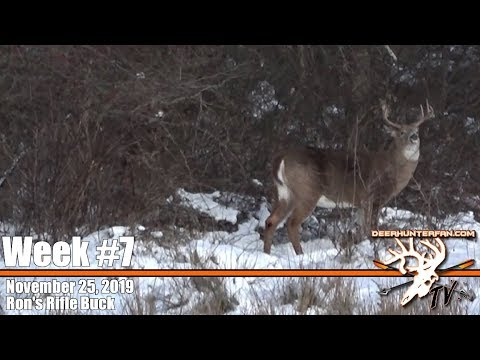 Deer Hunting In New York 2019 Buck Down
