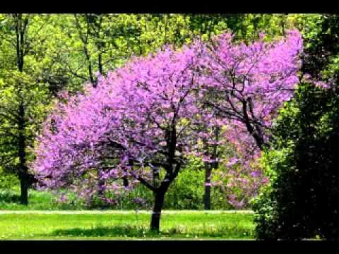Small garden trees youtube for Garden law trees
