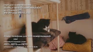 Приюту для животных нужна помощь !