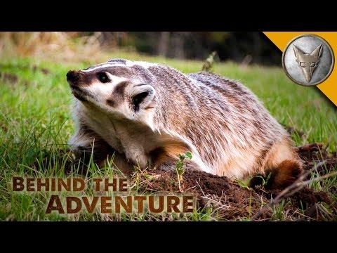 American Badger - Behind the Adventure