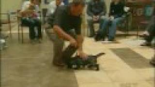 Puppy Classes / Early Socialization And Training, Consumer Reports