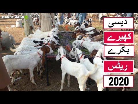 117 | Cow mandi 2018/2019 | Multan Mandi | Expensive Qurbani