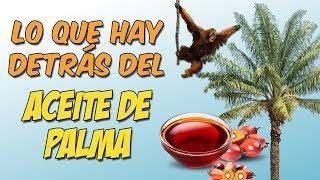 ¿Qué problema hay con el aceite de palma?