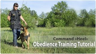 Obedience Training. Command 'heel'.