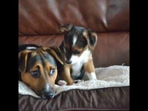 Joseph Pilates Original 34 Classical Mat Workout Exercise routine (Advanced)