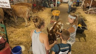 As If You Were There: Cattle Barn