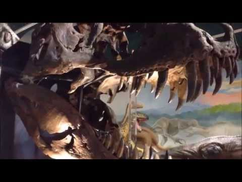 The Dudley Museum and Art Gallery Dinosaurs