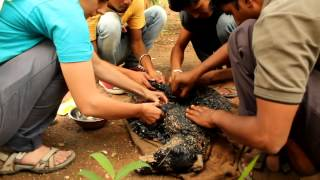 this amazing rescue make this devil dog covered in tar unable to move