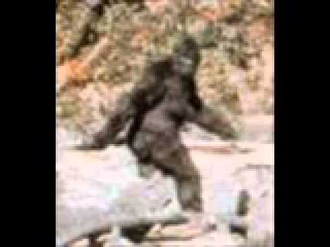 Bigfoot, Sasquatch: Dale Williams Interviews Dr. Jeff Meldrum