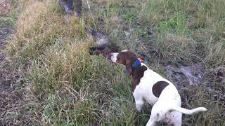 前回は捕獲はなかったけれど、今回は猪2頭の捕獲でした。 午前のラウン...