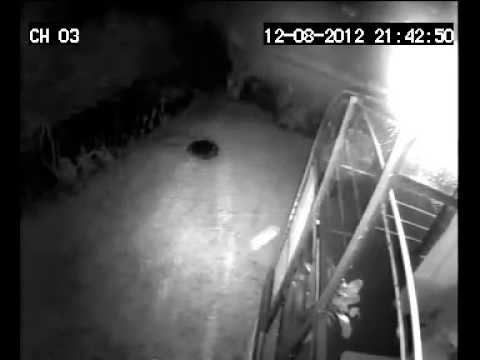 LASER ON BIRDS security camera footage from top of conservatory