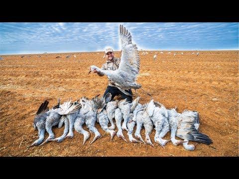 Sandhill Crane Hunting!! (CATCH CLEAN COOK)