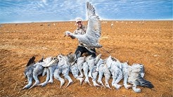 Sandhill Crane Hunting!! (CATCH CLEAN COOK)