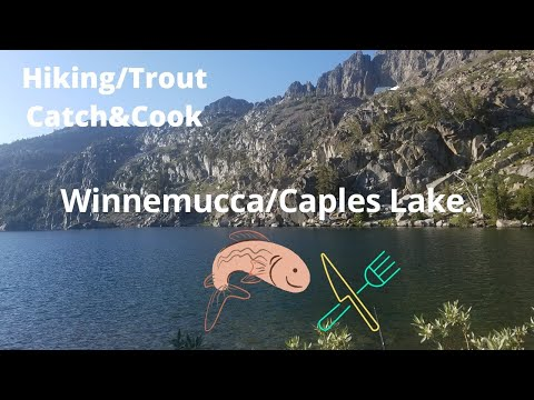Winnemucca/Caples Lake Catch And Cook Trout.