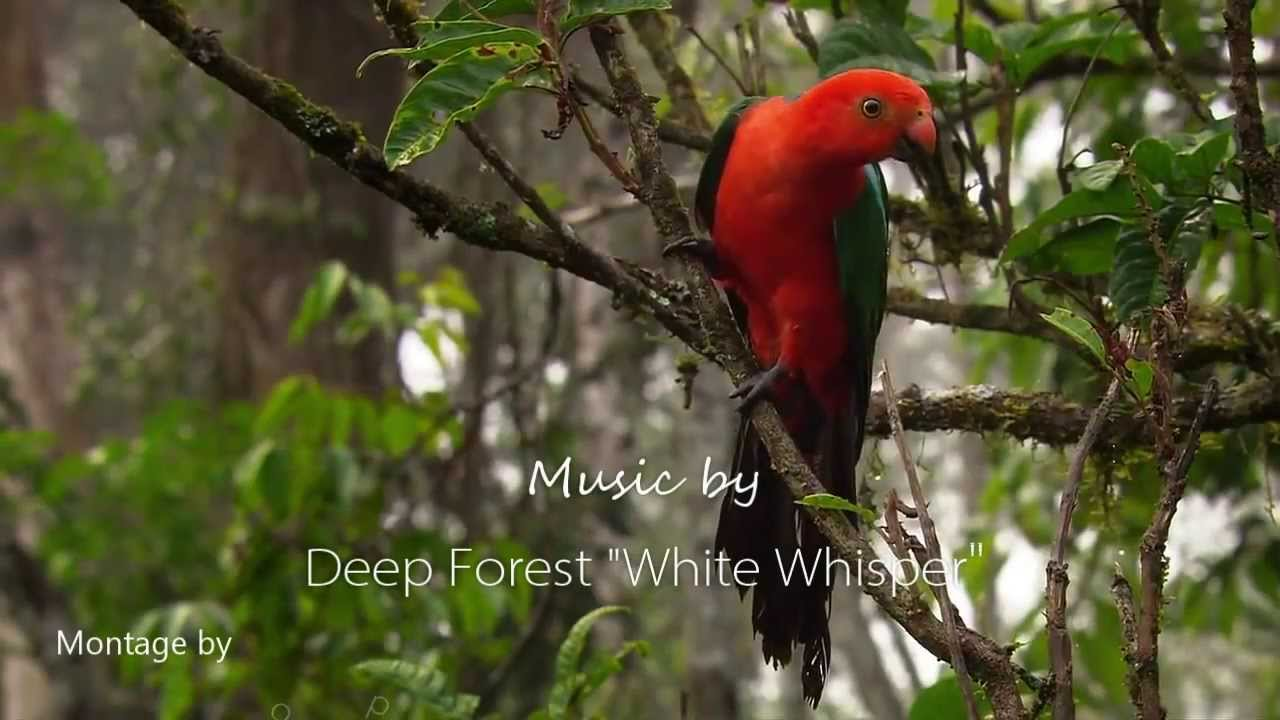 Beautiful Animals Series The Birds A Video Montage By World Of