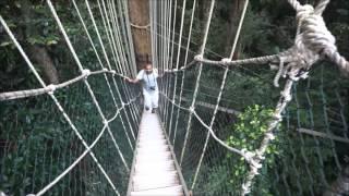 taman negara jungle trekking   malaysia backpacking
