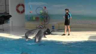 Дельфины и котики Коктебеля-4