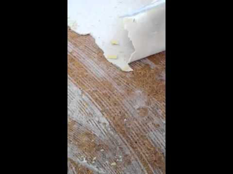 how to remove carpet pad glued on the floor - youtube