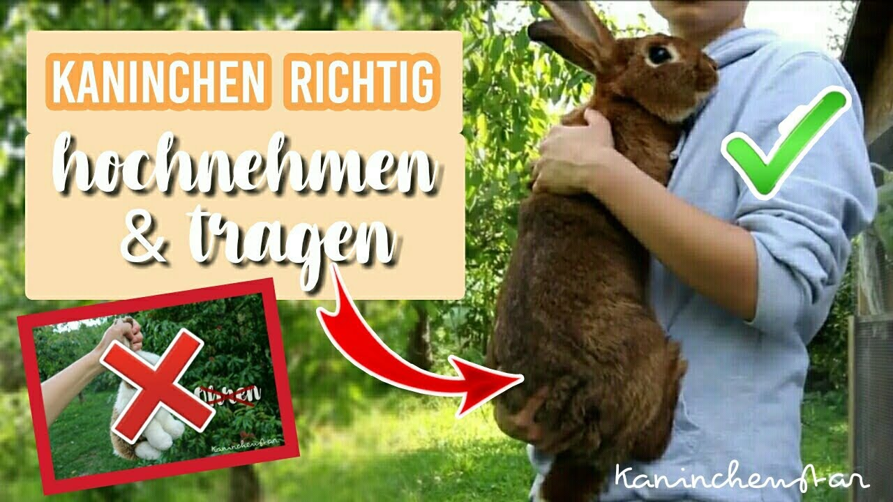 Kaninchen richtig HOCHNEHMEN & TRAGEN   So geht's ✔🐰   Kaninchenstar
