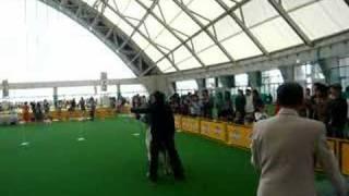 2007年FCIインター バーディーデビュー ハンドラーTAKA3.