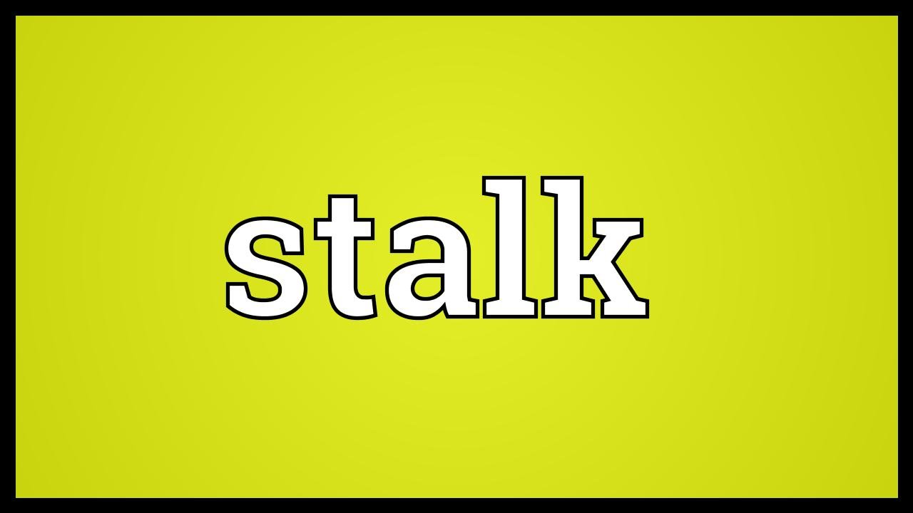 Image result for stalk meaning image