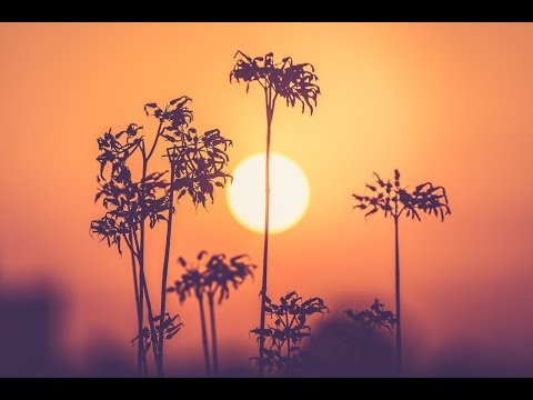 Music for Peace: Meditation Music, Peaceful Music, Healing Music, Soothing Music  🌄